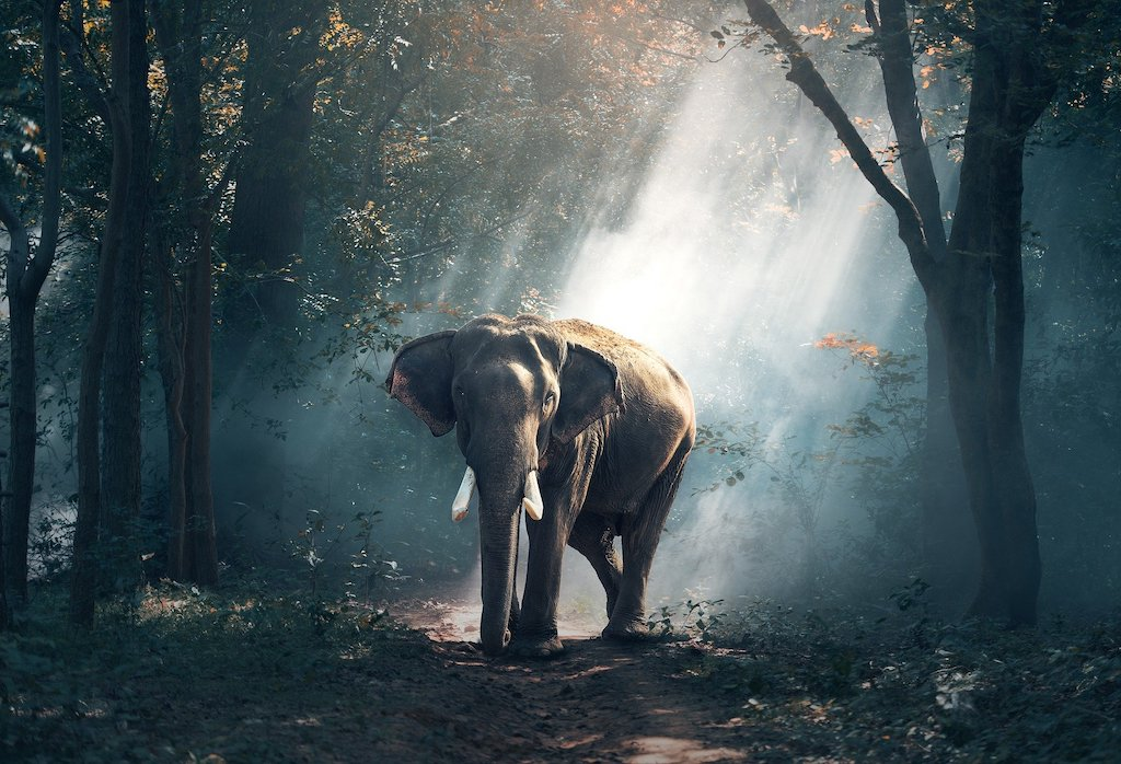 Experience an elephant rescue during the best time of year to visit bangkok